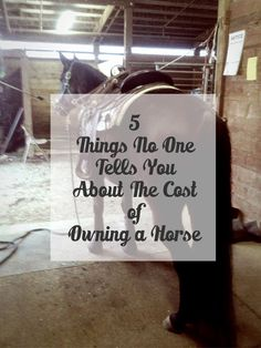 Are you thinking about buying a horse and want to know what costs to plan for? Here are five costs to owning a horse you need to consider. Use linked budget worksheet to estimate cost. Buy A Horse, My Horse, Horse Care Tips, Types Of Horses, All About Horses, Budgeting Worksheets, Horse Farms, Horse Training, Horseback Riding