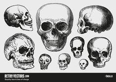 skulls.jpg (841×596)