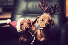 Santa Dog Hat/ so adorable! Baby Animals, Funny Animals, Cute Animals, Animals Beautiful, Beautiful Images, Beautiful Things, Christmas Animals, Christmas Dog, Merry Christmas