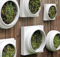 wall pot planters - Google Search