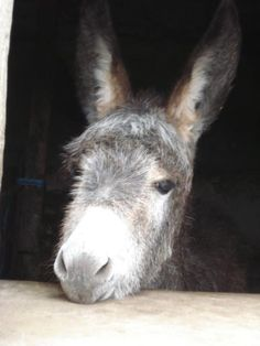 Read how versatile and wonderful the Donkey is.?