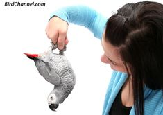 Have a great playtime with your pet African grey with these tips.