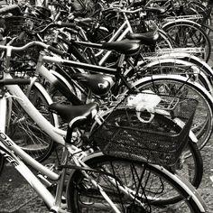 renrenmanto - Il parco circolante ideale. #Firenze #FRandthecity #BikeYourCity #bike #frenorosso #ig_italia #ig_firenze #igworldclub_country