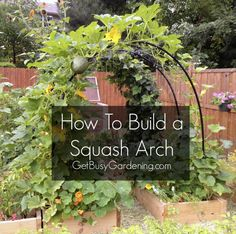 How To Build A Squash Arch...http://homestead-and-survival.com/how-to-build-a-squash-arch/