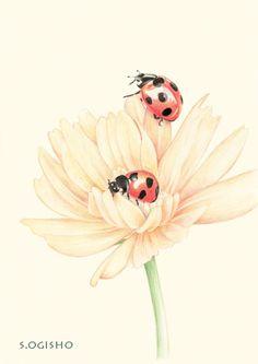 七星瓢虫 Pictures Of Insects, Kawaii Cat, Color Pencil Art, Cat Tattoo, Pictures To Draw, Colored Pencils, Cute Animals, Watercolor, Illustration