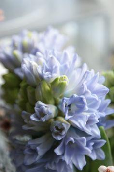 Spring Blue - Purple Blossom✿⊱╮