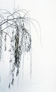 A minimalist willow tree at the end of the season.