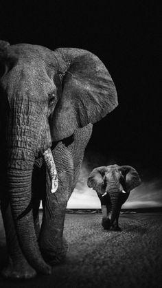 African Elephants IPhone Wallpaper - IPhone Wallpapers
