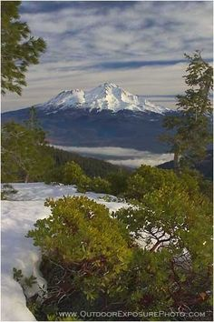 Shasta, the highest peak in the Cascade Range, in Siskiyou County, California by Sean Bagshaw for a rug hook project. Redding California, California Dreamin', Northern California, Chakras, Mount Shasta, Stock Image, Landscape Pictures, Beautiful Landscapes, The Great Outdoors