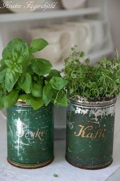 herbs in vintage tins