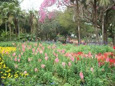 Mitchell Park, Durban