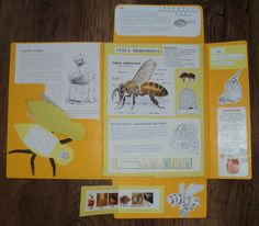 Včely - lapbook 1.část Bee Facts For Kids, Diy And Crafts, Crafts For Kids, Life Cycles, School Projects, Activities For Kids, Homeschool, Scrapbook, Education