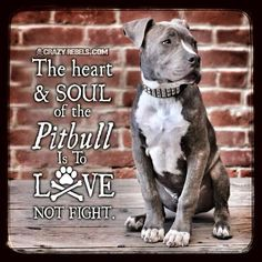 The heart and soul of the pitbull is to love, not fight.