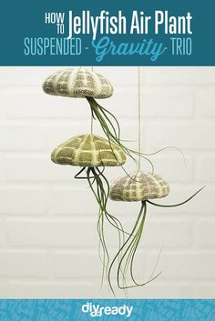 How to Make a Jellyfish Air Plant Suspended Gravity Trio, see more at https://diyprojects.com/how-to-make-diy-jellyfish-air-plants