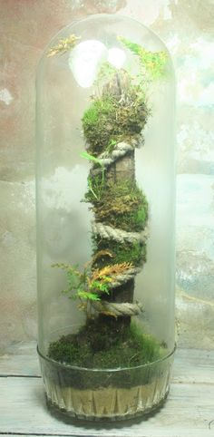 This is freaking amazing. From: the slug and the squirrel Air Plants, Cactus Plants, Indoor Plants, Terrarium Plants, Succulent Terrarium, Terrarium Ideas, Succulents Garden, Indoor Water Garden, Indoor Gardening