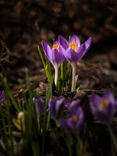 The Light of Spring by Painted Light Studio (hardpan photo), via Flickr