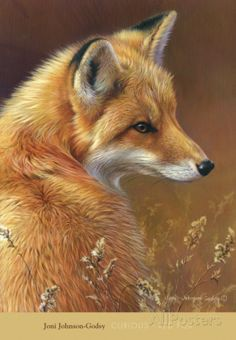 Curious: Red Fox Prints by Joni Johnson-godsy at AllPosters.com