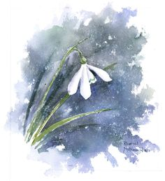 Rachel Mcnaughton - 483 - Snowdrop.jpg