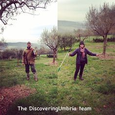 Olive trees pruning every year starting end of February #umbria #italy