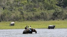 Rhino census in India's Kaziranga park counts 12 more
