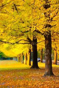 ✯Mellow Yellow