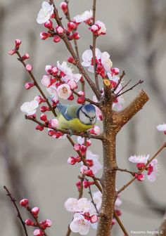 Flower and bird wallpaper for Android and iPhone Spring Wallpaper, Bird Wallpaper, Iphone Wallpaper, Great Backgrounds, Flower Backgrounds, Spring Is Here, Spring Time, Beautiful Birds, Animals Beautiful