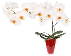 Feng shui  tips for the best use of plants http://fengshui.about.com/b/2013/11/22/feng-shui-tips-priorities-and-feng-shui-plants.htm Find more feng shui decor tips: http://FengShui.About.com