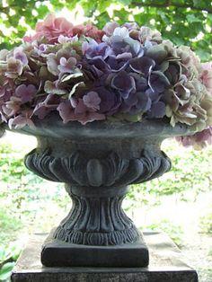 Prachtige hortensia in grote vaas
