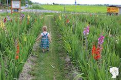 Unser Wochenende in Bildern ist online: Mit der Suche nach einem Familienauto und einer tollen Zeit im Plantschbecken!