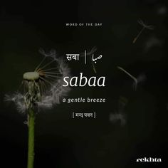 Urdu Words With Meaning, Hindi Words, Urdu Love Words, Unusual Words, Rare Words, Foreign Words, Poetic Words, Idioms And Phrases, One Word Quotes
