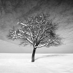 """ Winter Tree""  By, Mac Oller, Poland"