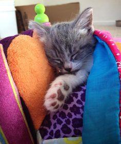 Yes, tiny kitten sleeping in a tiny bed. #KittenHappyHour