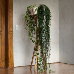 { Green, suspended } ● Growing plants indoors isn't always easy - spaces are narrow, plants suffer, temperature is always wrong. Thankfully we have a solution for this too! Check out these innovative green designs by Urbanature --> Lovethesign.com/promo/urbanature  #lovethesign #liveitalian #homedecoration #instahome #love #design #homedesign #interiordesign #mobiliario #home #green #greenery #indoorgarden #suspended #nature