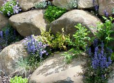 Rock wall planting tips, list of drought tolerant plants good in rock walls.