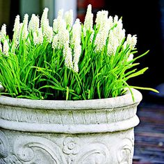 """Container Gardening Ideas container garden tips. also on this page: links to several container garden ideas (on the right, titled """"your picks"""") - How to create pots of your favorite spring bulbs in an afternoon. Garden Bulbs, Garden Planters, Shade Garden, Patio Plants, Balcony Garden, Container Plants, Container Gardening, Gardening Tips, Plant Containers"""