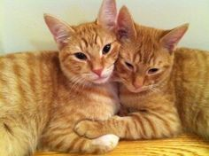 Jared's kitties!