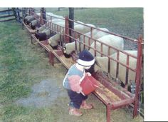Round Hay Feeder for Goats   ... hay brackets to attach a piece of plywood to feed hay along with grain