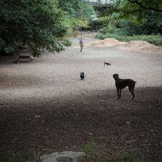 © Anne-Claire Rohé 2014. Dog park.