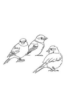 sparrows ...try with wire