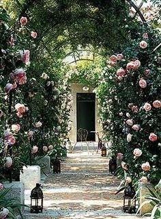 Arbor in France - Pierre de Ronsard roses.