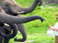 Knysna Elephant Park South Africa South Africa, Explore, Places, Travel, Viajes, Destinations, Traveling, Trips, Lugares