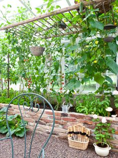 could use a ladder...great for peas and beans. Idea: If I turn a wall of the wood shed into a window wall, I could put a raised bed just outside of it, suspend a ladder, then the VINING PLANT WOULD PROVIDE SHADE WHAAAAAAAAT