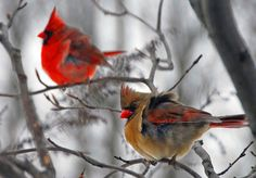 Backyard Bird photography tips