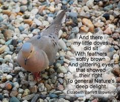 my little doves Favorite Words, Favorite Quotes, Pretty Animals, Pretty Birds, Elizabeth Barrett Browning, Shel Silverstein, Great Expectations, Simple Reminders, Scott Fitzgerald
