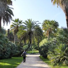 A Must See in Rome: The Botanical Garden. You discover a veritable forest in the very centre of Rome, in the area of Trastevere. #botanical #garden #palms #fountain #rome #italy #travel