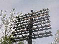 Still-attached to cross arm, telephone pole insulators.