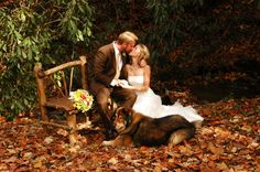 Wedding photo idea, wooden bench in the woods ground full of leaves
