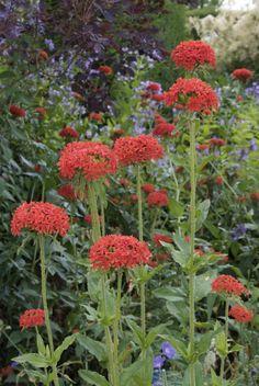 Flower Farm, Pavement, Garden Planters, Wood Design, Amazing Gardens, Garden Landscaping, Beautiful Flowers, Garden Design, Backyard