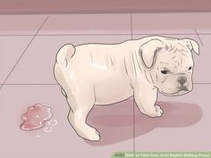 how to take care of stray puppy