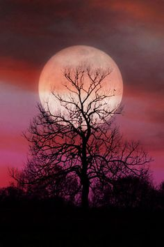 romantic pink sky moon